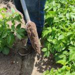 soil sample cs3