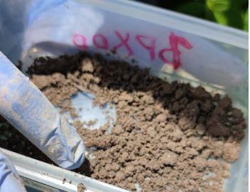 soil samples plot