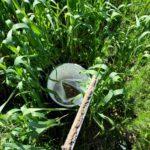 soil samples 2 cs14b