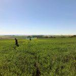 field working